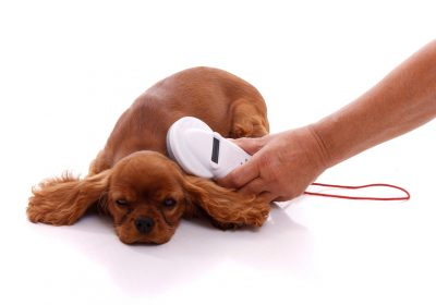 Check the Chip | Learn About Microchipping Your Dog