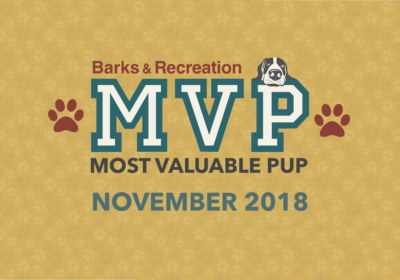 Barks & Recreation Most Valuable Pups (MVPs) — November 2018