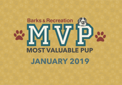 Barks & Recreation Most Valuable Pups (MVPs) — January 2019