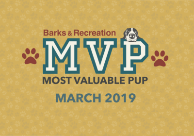 Barks & Recreation Most Valuable Pups (MVPs) — March 2019