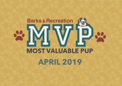 Barks & Recreation Most Valuable Pups (MVPs) — April 2019