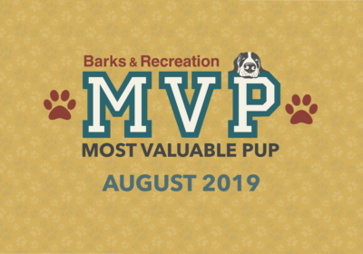 Barks & Recreation Most Valuable Pups (MVPs) —August 2019