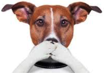 Ugh! His Breath Stinks! | Halitosis in Dogs